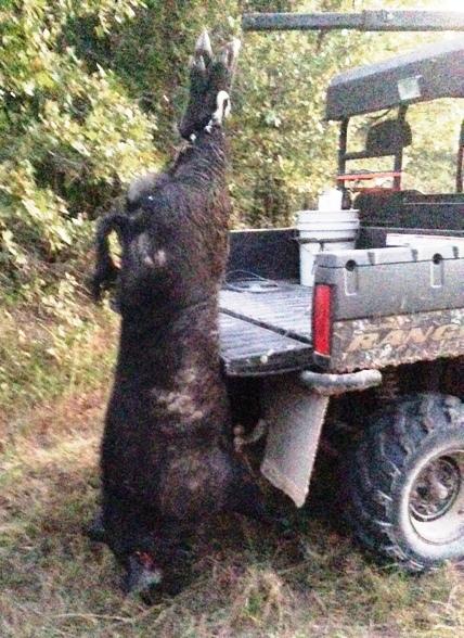2015 Ranger 900 Crew Game Deer Hog Hoist Loader My Way