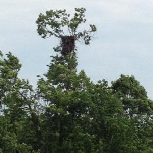 Eagle Nest Far